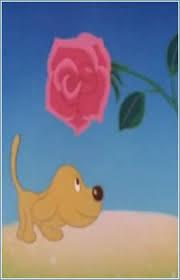 Rose Flower And Joe